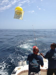 Tuna fishing for the big boys in cabo for Kite fishing for tuna